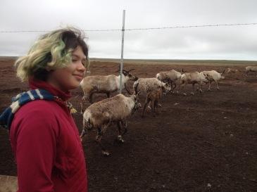 Port Heiden's reindeer herd